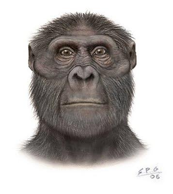 antepasados del hombre Australopithecus afarensis