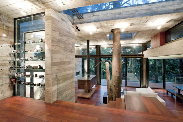Picture of Casa Corallo interior with tree passing through the living room