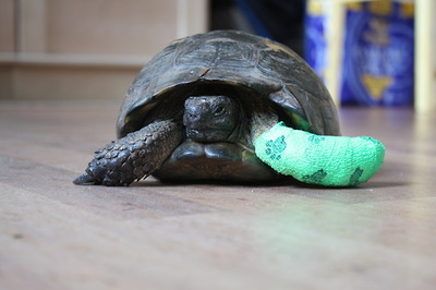 turtle+cast.jpg