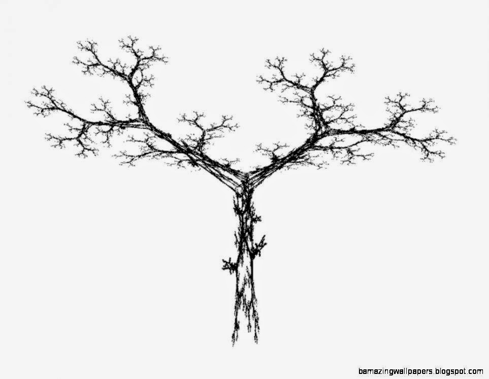 Line Drawing Of A Tree   ClipArt Best