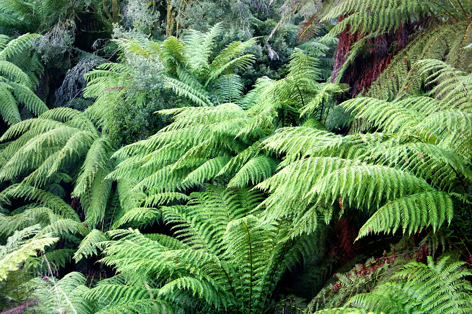 How to feed tree ferns the garden of eaden for A gardener is planting two types of trees