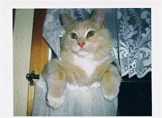 cat posing in window