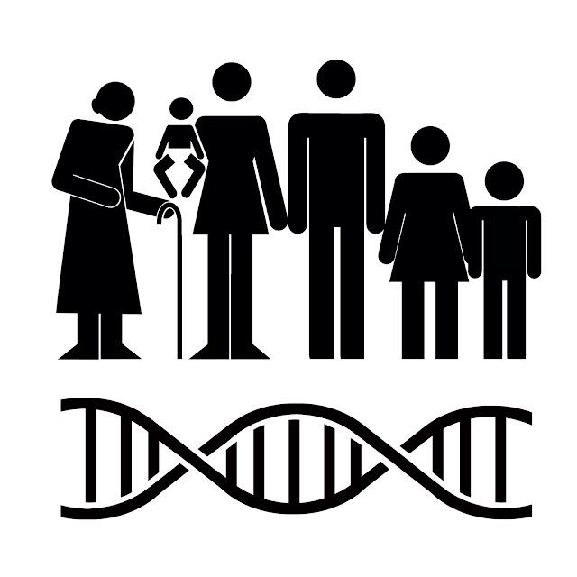 evolución, ADN mitocondrial, eucariotas,