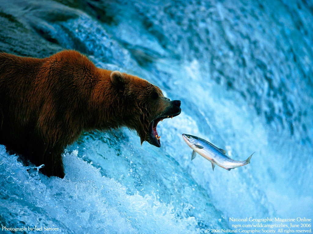 Niko 39 s photo 1 blog macro photo examples for Bear catching fish