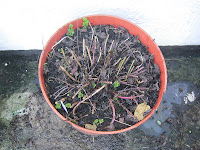 Herb Garden - Mnt