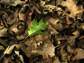 http://3.bp.blogspot.com/-Y0AWl7io5AE/TWGaQFVGMHI/AAAAAAAAApg/1La6Dg-bClI/s1600/Turn_over_a_new_leaf_by_kathan1.jpg