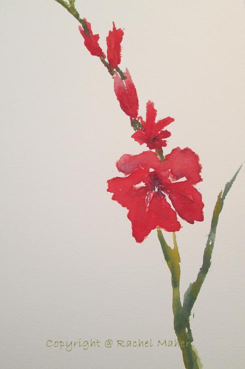 Gladiola I