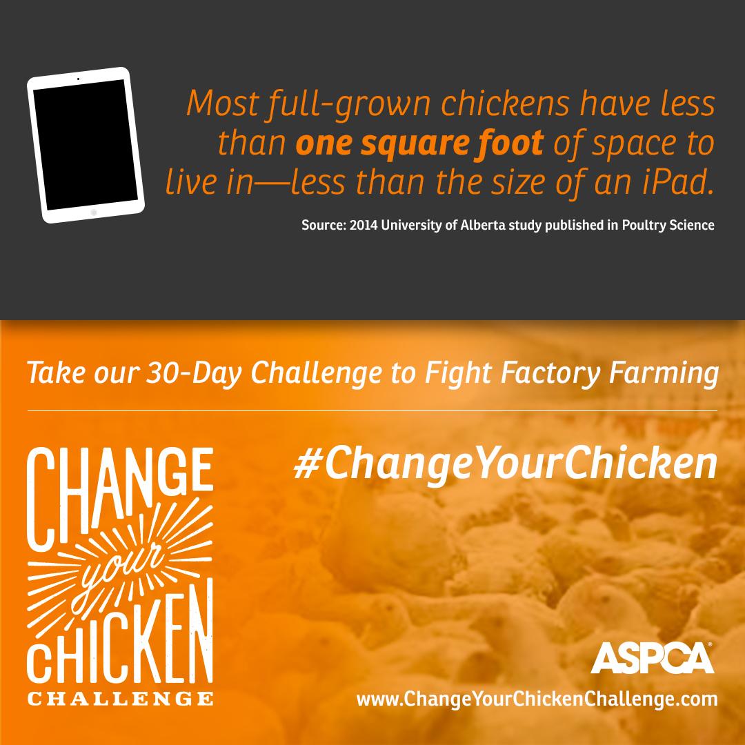 #ChangeYourChicken