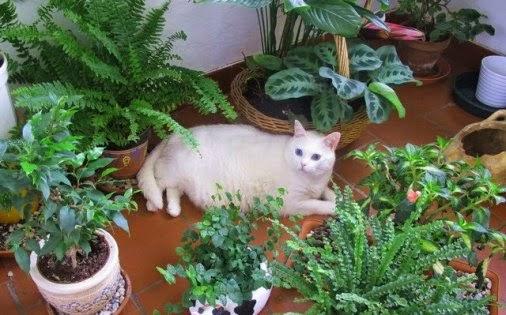 Plantas t xicas para el gato revista gatos for Plantas toxicas gatos