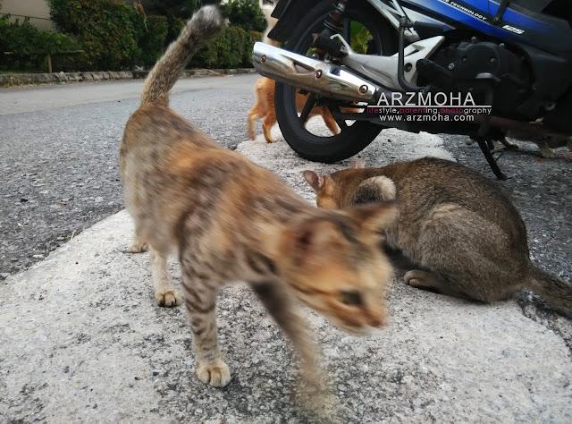kucing, cik puteri dan kucing, didik anak sayangi haiwan, tips ajar anak suka kucing,