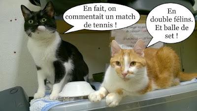Deux chats commentent du tennis.