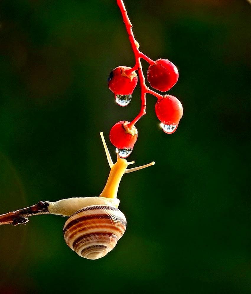 А улитка иногда вздыхала, глядя издали на муравейник.