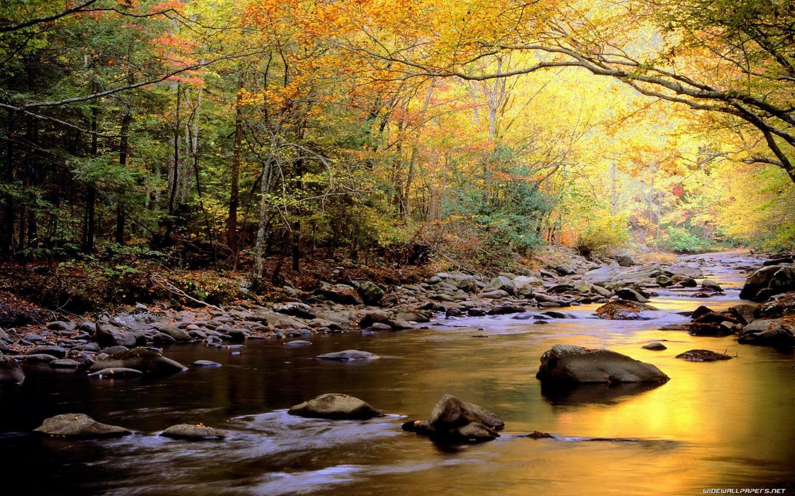 http://3.bp.blogspot.com/-Y2Us_u8mgxc/TlZTcFV7H3I/AAAAAAAAALY/6nsqrrYvcaA/s1600/nature-wallpaper-1680x1050-015.jpg