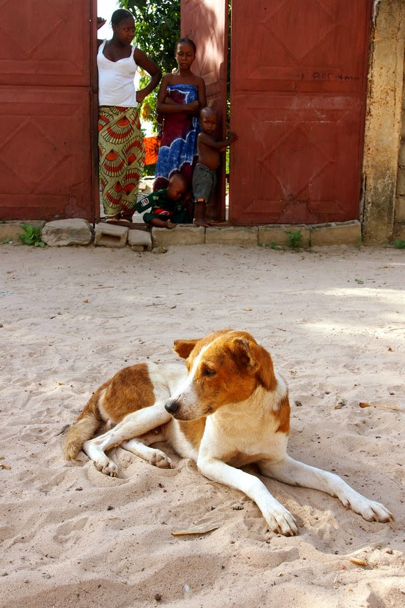 stray dog in gambia