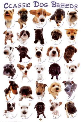 My top collection all types of dogs 4