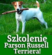 szkolenie psów parson russell terrier