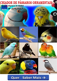 AS MAIS BELAS AVES EXOTICAS.