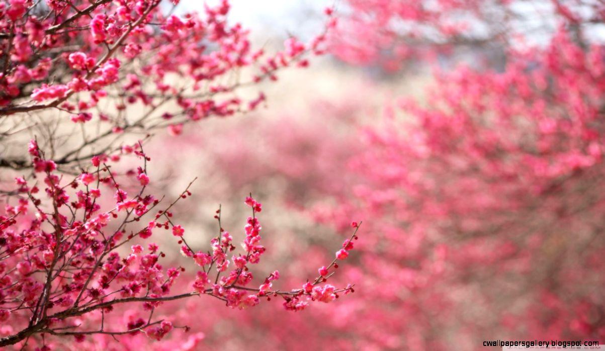 Popular Wallpaper High Resolution Spring - spring-signs-hd-desktop-wallpaper-high-definition-fullscreen  Pictures_217821.jpg