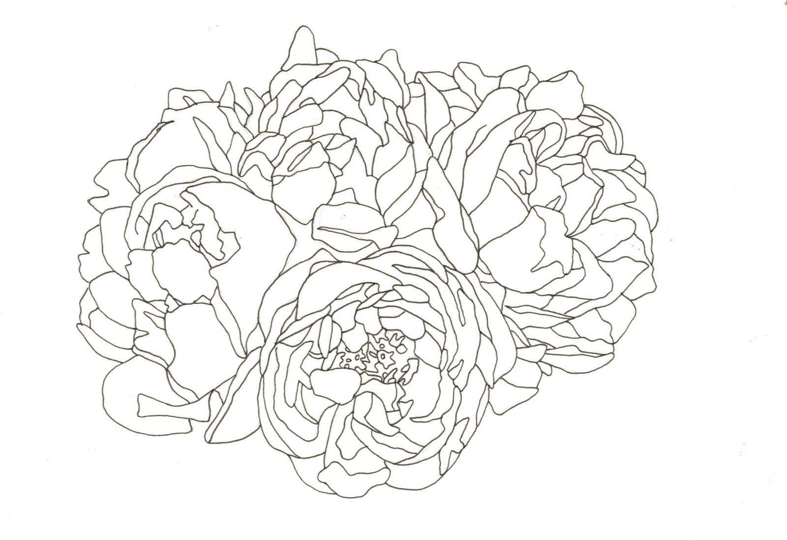 Line Drawing Floral : Sophie brabbins floral drawing