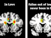 Seperti Ini Otak yang Sedang Jatuh Cinta