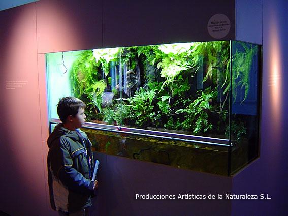 Acuarios y estanques tutoriales montar primer acuario for Estanques online