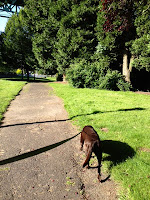 Ann Again... and again  Benny and Cathedral Park Portland Oregon