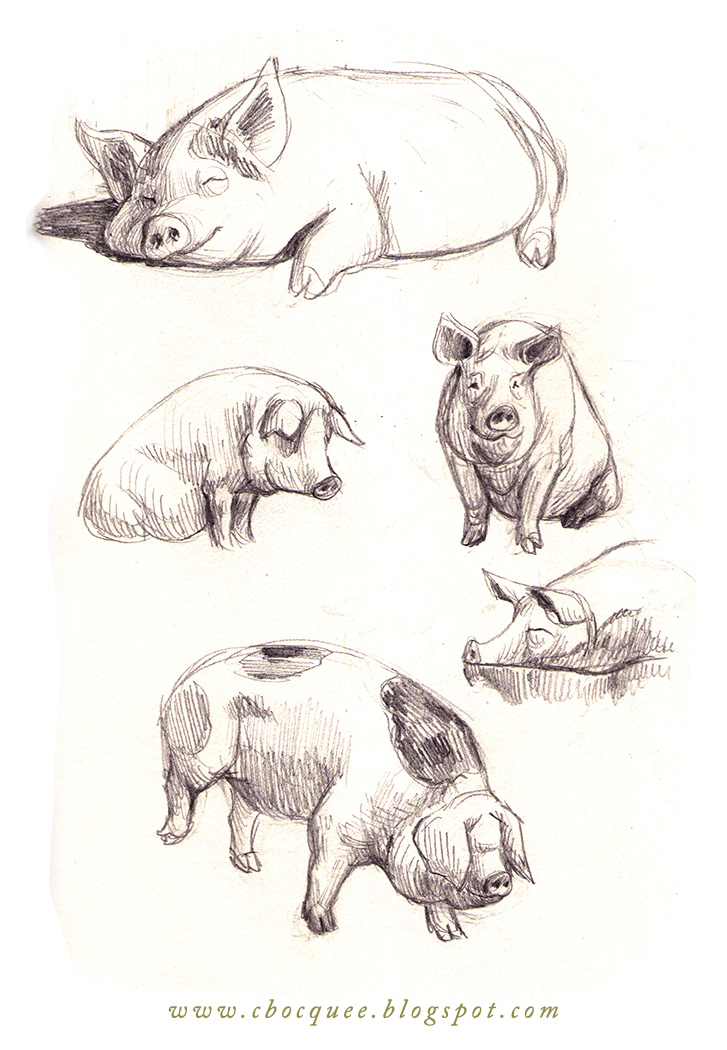 sketchbook drawings of pigs