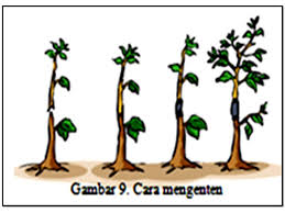 Adaptasi dan ciri-ciri tumbuhan:
