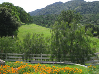 California poppies, trees, and green hills along Marsh Creek Road near Clayton, California