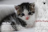 Rädda en katt!!!