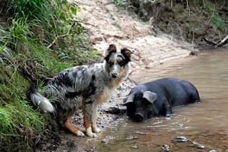 chienne amie avec cochonne