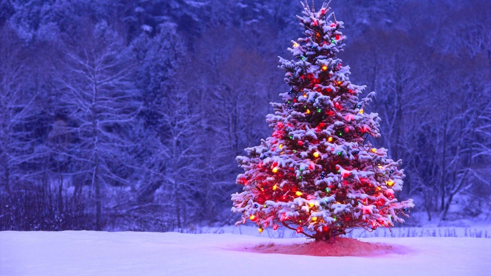 Feliz Natal Buteco !