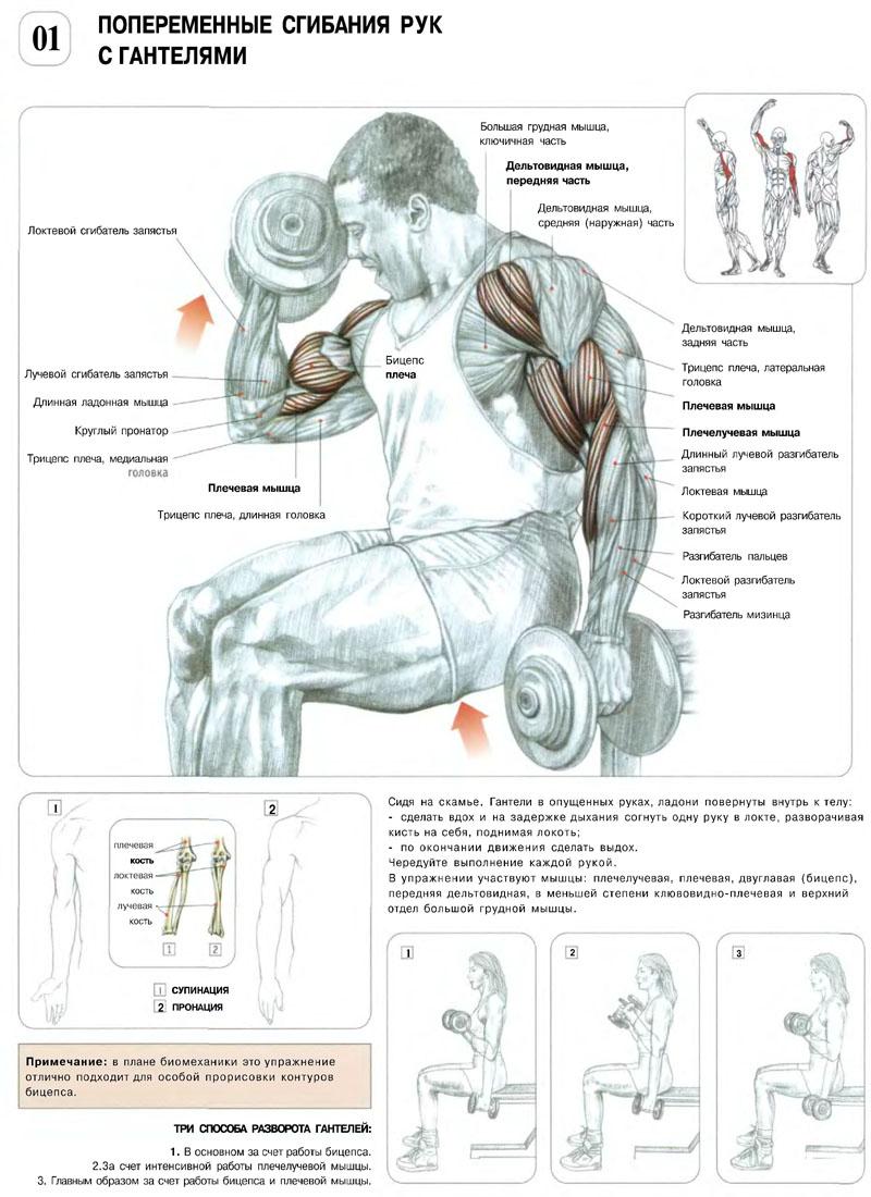 Как накачать мышцы в домашних условиях штангой