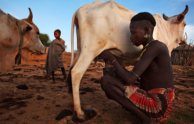 Digesting milk in Ethiopia: A case of multiple genetic adaptations