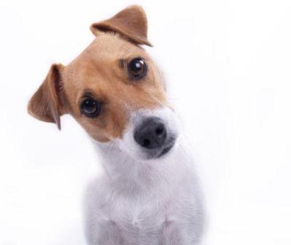 http://3.bp.blogspot.com/-Y6HGidq_6lI/Tm-RYoO7c8I/AAAAAAAABE4/GmF4BUxDSog/s1600/confused_dog.jpg