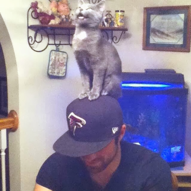 Funny cats - part 79 (35 pics + 10 gifs), cat stands on guy head