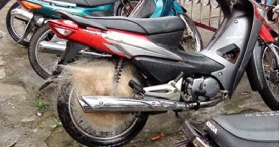 Inilah Rahsia Polis Vietnam Menangkap Pelumba Haram