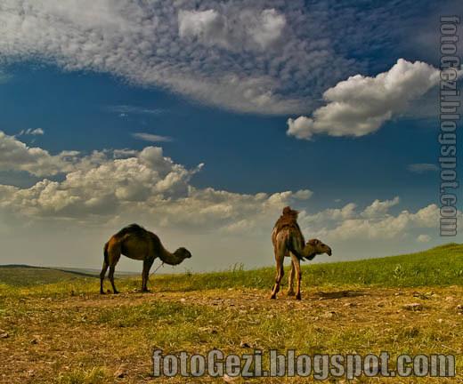 İpek yolu'nun kamyonları, develer, Göbeklitepe, Urfa