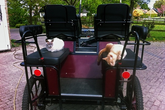 Cats on carriage in Amsterdam Netherlands