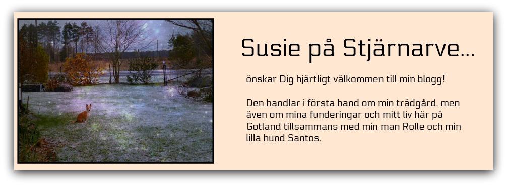 Susie på Stjärnarve...