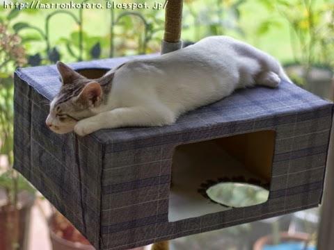 キャットタワーの上で寝ている子猫
