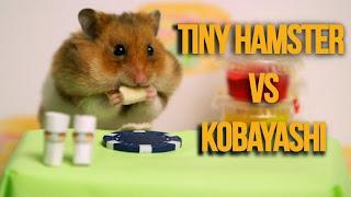 Hamster kecil lawan Kobayashi Dalam Pertandingan Makan