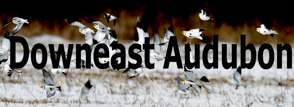 Downeast Audubon