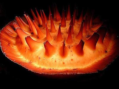Make It Davao Rafflesia World S Largest Flower