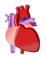 Tingkat Organ - Jantung
