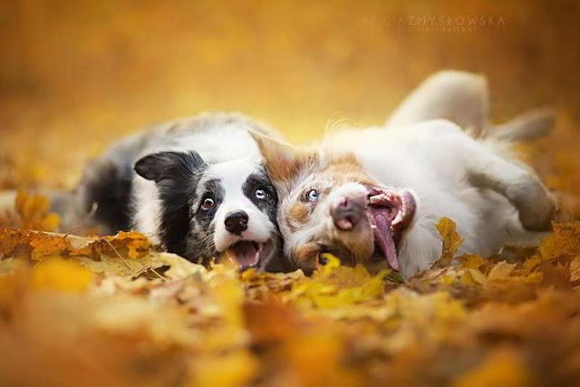 dog-photography-alicja-zmyslowska-18