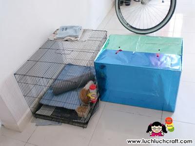 guinea pig cage house