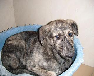 Sombra hermana Bruma Adiestramiento canino a domicilio en Alicante