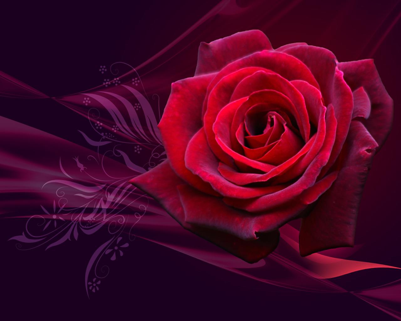 http://3.bp.blogspot.com/-Y899R4ZdiPE/T4LticyIi0I/AAAAAAAACx0/WqHnqSmGDWM/s1600/2011-red-rose-valentine-day-wallpaper.jpg
