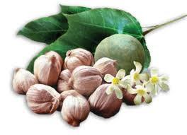 fruto del arbol del kukui